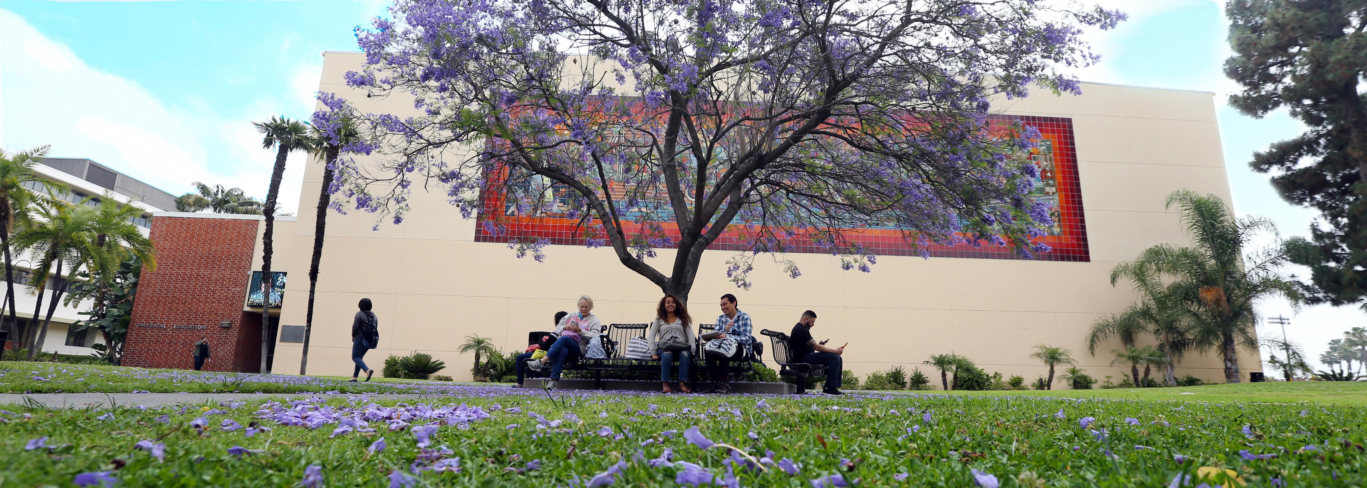 photo of jacaranda tree