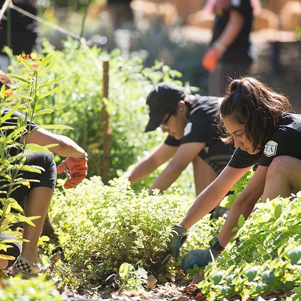 Students volunteer in garden